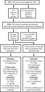 hpv clearance and reinfection