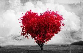 diálogo sobre o amor: uma análise de opostos
