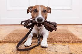 5 best dog doorbells they ll tell when