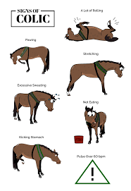 Pin by Addie+Fox on dibujos hipicos | Horse behavior, Horse facts, Cute  horses