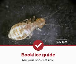 get rid of booklice complete guide