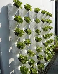 pvc pipe vegetable garden ideal me