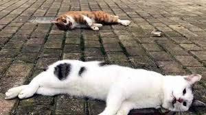 Coronavirus   gatti e cani gettati dalle finestre per psicosi di ...