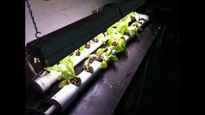 diy dft nft pvc hydroponic system