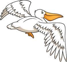 Pelican Flying Creative For Kids