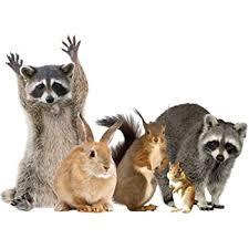 Amazon Com Supportiback Woodland Animals Window Decal Cling Raccoon Friends Vinyl Sticker Home Kitchen