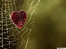 stuck in spider s web hd wallpaper