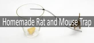 rat trap to get rid of nasty rodents