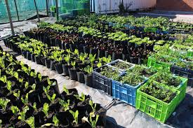 community urban gardening vpuu