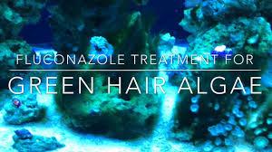 fluconazole treatment for green hair