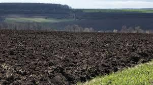 Старобільська місцева прокуратура вимагає повернення земель сільськогосподарського призначення державі
