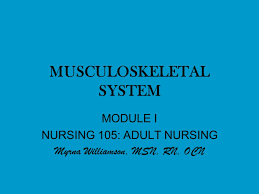 MUSCULOSKELETAL SYSTEM MODULE I NURSING 105: ADULT NURSING Myrna Williamson,  MSN, RN, OCN. - ppt download