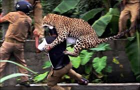 Image result for animals attacking people