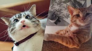 قطط مضحكة اجمل القطط المضحكة بنات كول