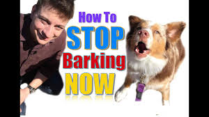 How To Teach Your Dog Not To Bark Humanely And Effectively 3 Things You Can Do Right Now Youtube