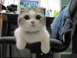 صور قطط مضحكة وكوميدية