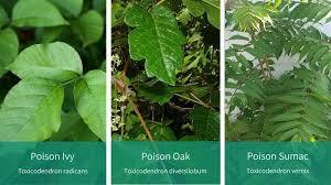 Look Out for These Painful Plants