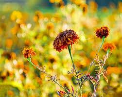 caption tentang bunga yang layu caption terbaru