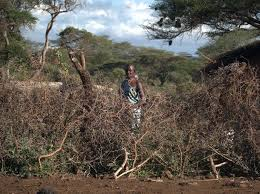 Are Electric Fences Really The Best Way To Solve Human Elephant Land Conflicts
