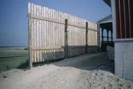 Windbreaks Provide Shelter For Cattle