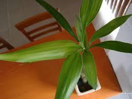 20 plantas de interiores y sus cuidados