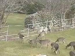 Electric Fence Deer Electric Fence