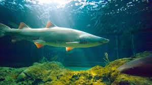 visit national aquarium in baltimore in