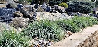 best border plants for your garden