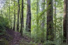 The Addie Johnson Trail