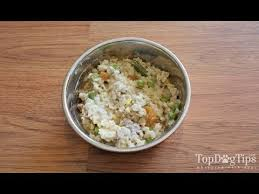 healthiest homemade dog food with