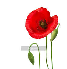 Poppy Wall Decal Pixers We Live To Change
