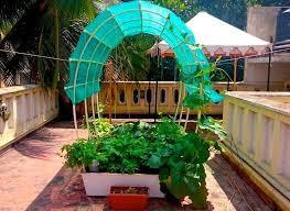 smart garden single complete 24 sq