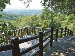 Taipei Autumn 2018 Vol 13 Appreciating Camphor Trees And A Tea Plantation On A Misty Mountain Camphor Tree And Zhanghu Trails Loop Taipei Travel