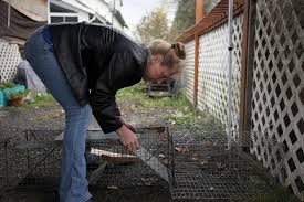 Herding (and Fixing) Feral Cats Through Lewis County's 'Cat's Meow' Program  | News | chronline.com