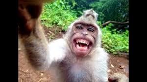اضحك معنا في اجمل صور مضحكة شاهد معنا قبل الحذف ستضيع حياتك ان