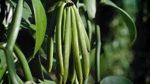 BEYOND THE JAR - Episode 1: Vanilla planifolia - YouTube