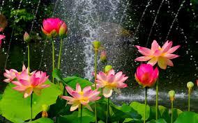 nature flower garden wild pink hd