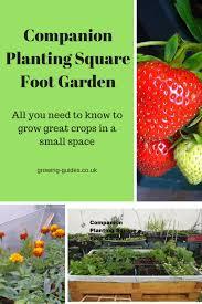companion planting square foot garden