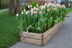 wooden crate as a planter box