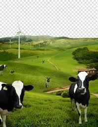 الماشية بالأبيض والأسود في حقل العشب الأخضر تنسيق ملف طبقات