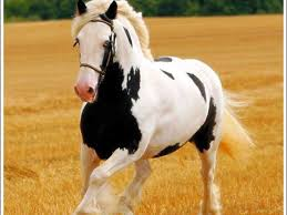 free horse screensavers and wallpapers