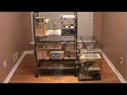 custom design chinchilla cage tour