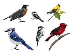 Bird Wall Decals Realistic Songbird Wall Stickers Hand Painted Designs