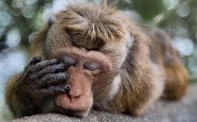 تحميل خلفيات قرود الحيوانات القرد تأملات عريضة 1920x1200