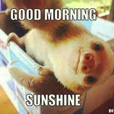 funny good morning meme cute and