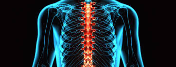 Image result for x ray spine image