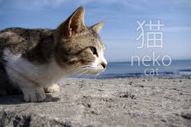 funny cat expressions and phrases in ese