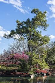 hd wallpaper zen zen garden japanese