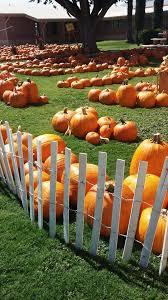 Grace Pumpkin Patch