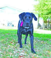 Why We Don T Recommend Electric Fences Shock Collars Whole Dog Journal